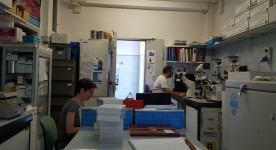 Elisa Giovannetti and Niccola Funel in the lab