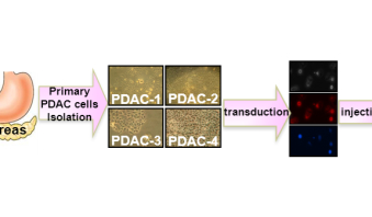 New preclinical models