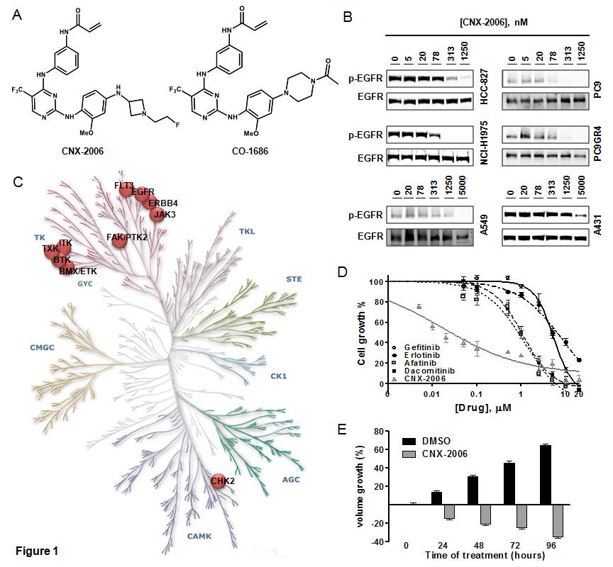 In vitro activity of CNX-2006