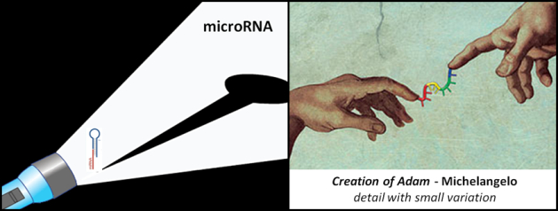 Studies on microRNA